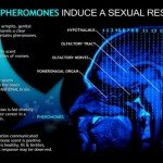 What Are Pheromones and How Do They Work?