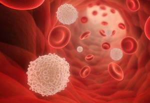 herpes and white blood cells