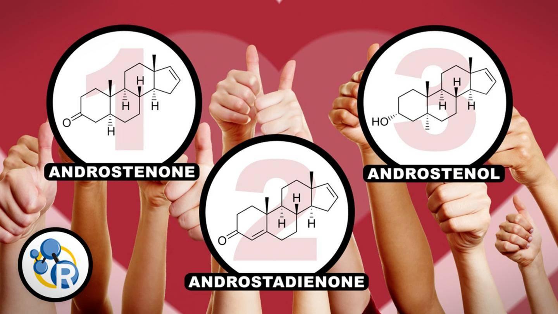 Top Pheromones